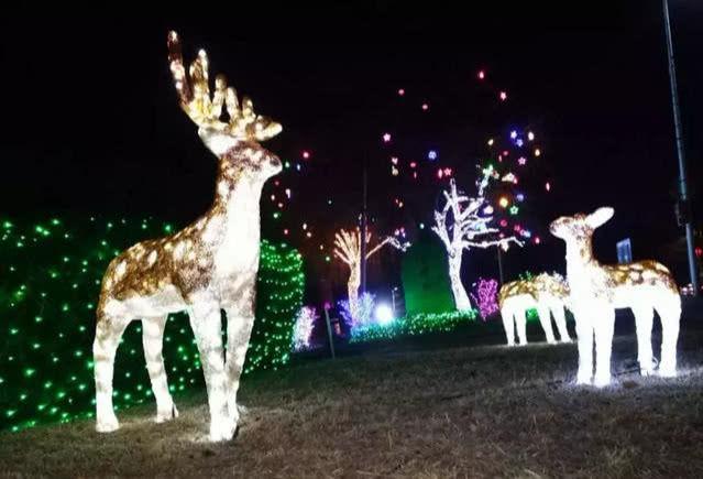 小鹿也被亮化了