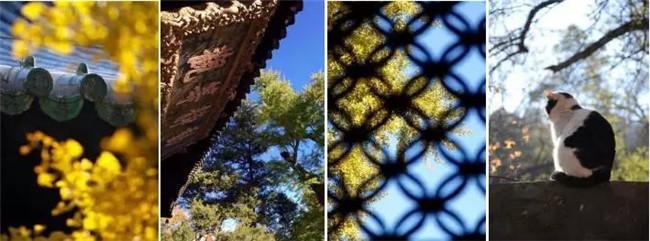 以实例说明如何做好古建筑亮化